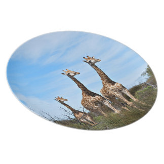 Giraffe Family On Grassy Hilltop Plate