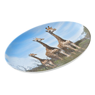 Giraffe Family On Grassy Hilltop Porcelain Serving Platter