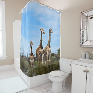 Giraffe Family On Grassy Hilltop Shower Curtain