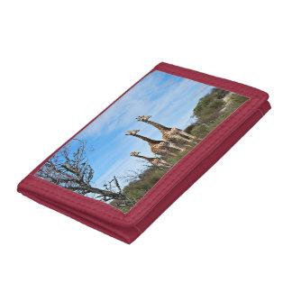 Giraffe Family On Grassy Hilltop Tri-fold Wallet