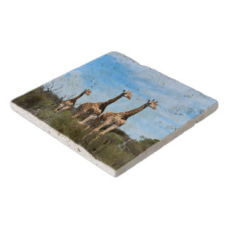 Giraffe Family On Grassy Hilltop Trivet