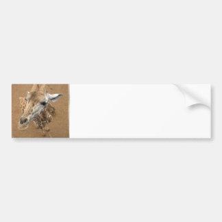 Giraffe Gaze Bumper Sticker