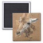 Giraffe Gaze Magnet