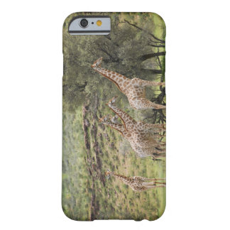 Giraffe, Giraffa camelopardalis, Kgalagadi 3 Barely There iPhone 6 Case