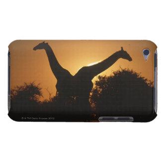 Giraffe (Giraffa camelopardalis) Pair Barely There iPod Cases