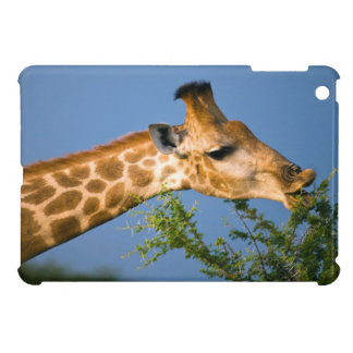 Giraffe (Giraffe Camelopardalis) Feeding iPad Mini Cases