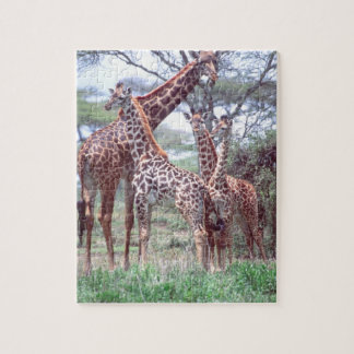 Giraffe Group or Herd w/ Young, Giraffa Jigsaw Puzzle