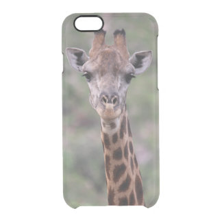 Giraffe Headshot Clear iPhone 6/6S Case