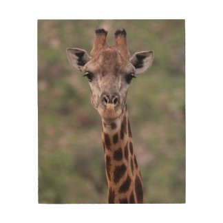 Giraffe Headshot Wood Wall Decor