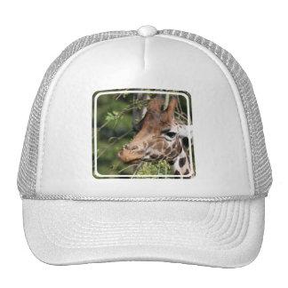 Giraffe Images Baseball Hat