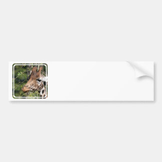 Giraffe Images Bumper Stickers
