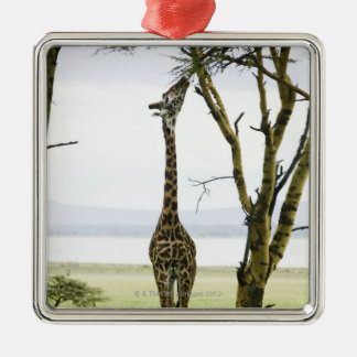 Giraffe in Kenya, Africa Metal Ornament