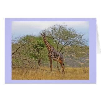 Giraffe in Tanzania Africa Greeting Card