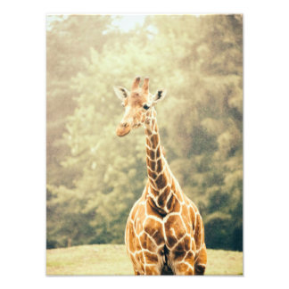 Giraffe In The Rain Photo Print