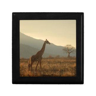 Giraffe in the Savannah Gift Box