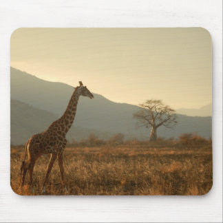 Giraffe in the Savannah Mouse Pad