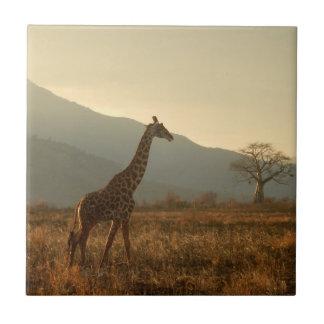 Giraffe in the Savannah Tile