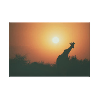 Giraffe in the sunset canvas print