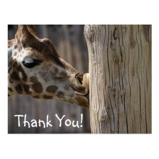 Giraffe Kisses Thank You Postcard