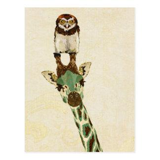GIRAFFE & LITTLE OWL Postcard