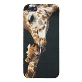 Giraffe Love iPhone 5 Cover