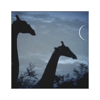Giraffe Moon Canvas Print