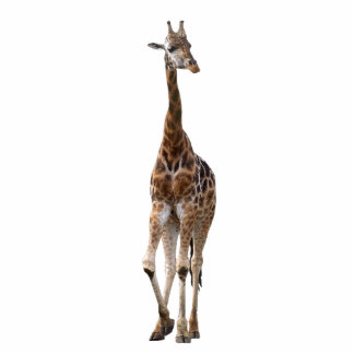 Giraffe Named Tip Top Ornament..! Photo Sculpture Decoration