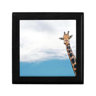 Giraffe neck and head against the clear blue sky gift box