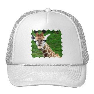 Giraffe Photo Baseball Hat
