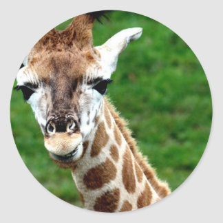 Giraffe Photo Stickers