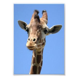 Giraffe Photo with Blue Sky Background 5x7 Print