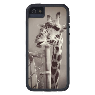 Giraffe Photograph - Vintage Style iPhone 5 Cases