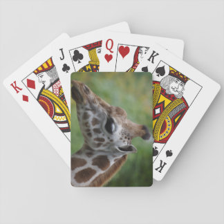 Giraffe Playing Cards