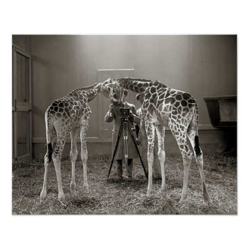 Giraffe Portrait, 1926 Poster