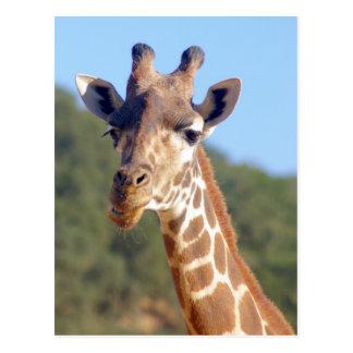 Giraffe Postcard