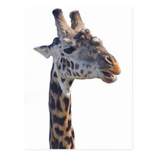 Giraffe Says Hello Tom Wurl Postcard