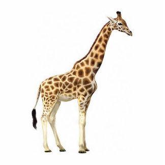 Giraffe Sculpture Standing Photo Sculpture