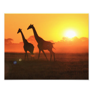 Giraffe Silhouette - Freedom Run Photograph