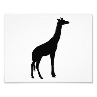 Giraffe Silhouette Photo