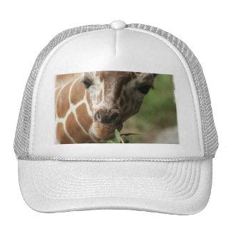 Giraffe Snack Baseball Cap Trucker Hats