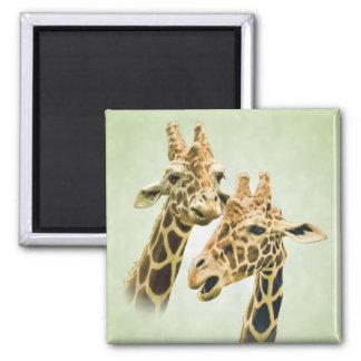 Giraffe Talk Magnets