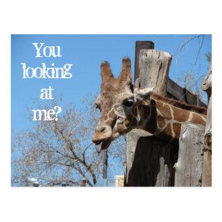Giraffe Tongues Postcards