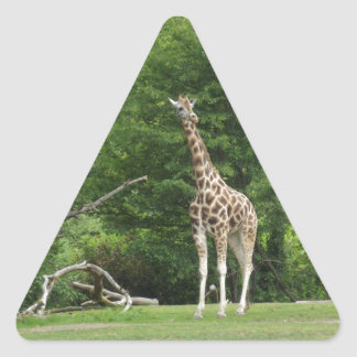 Giraffe Triangle Sticker