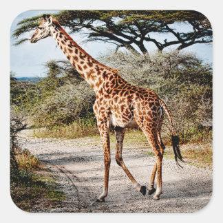 Giraffe Wild Animal Africa pattern print Square Sticker