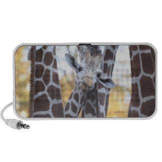 Giraffes at Tama Zoo Tama Zoo Tokyo Mp3 Speaker