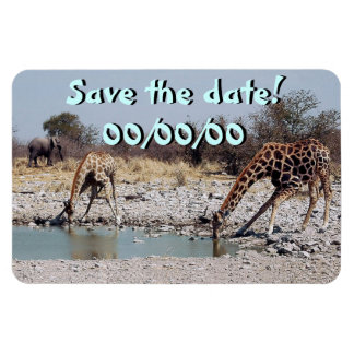 Giraffes at the Watering Hole Rectangular Photo Magnet