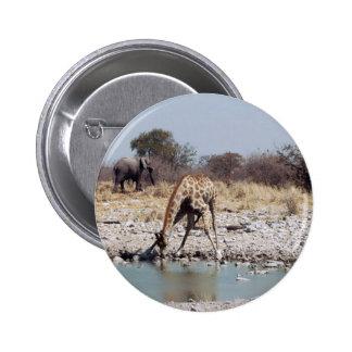 Giraffes Pinback Buttons