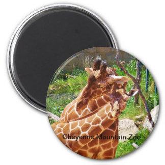 Giraffes giving affection magnet