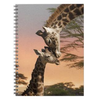 Giraffes Greeting Each Other Notebook