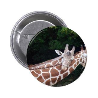 giraffes rubbing necks pin